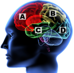 Strengthening The Influence of The Brain Game